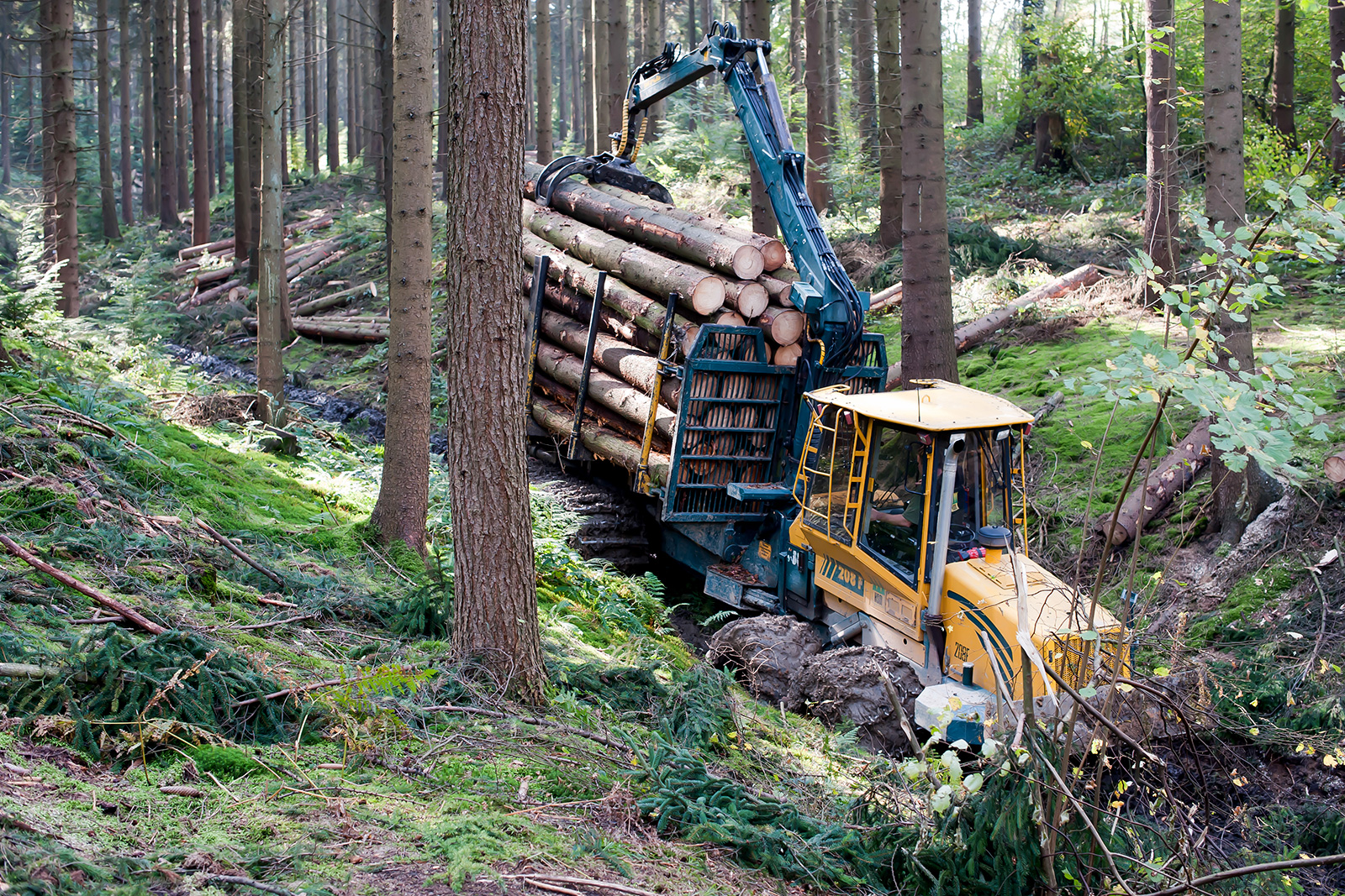 Forestry work in the forest in Engelskirchen